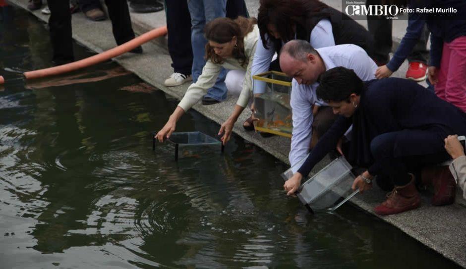 Laguna de chapulco ser criadero de carpas diario cambio for Criadero de carpas