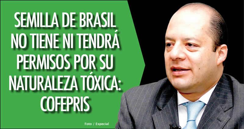 Semilla De Brasil No Tiene Ni Tendr Permisos Por Su: semilla de brasil es toxica
