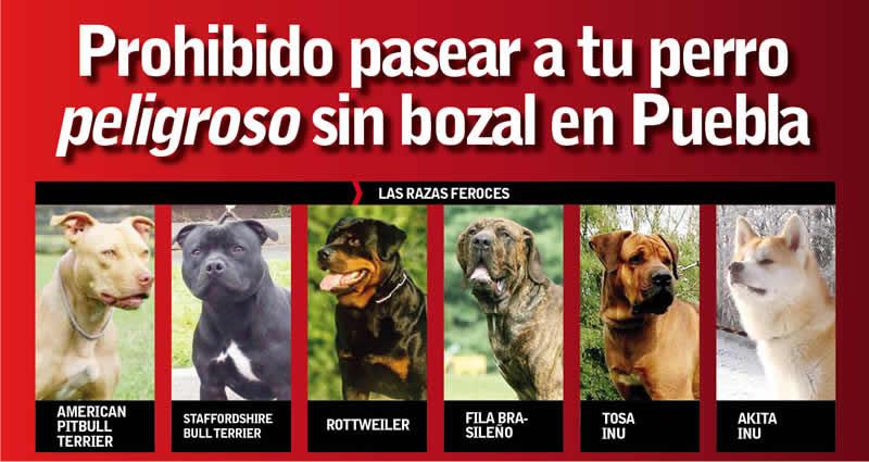 Aprueban multar a ciudadanos por pasear perros sin correa y bozal