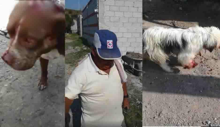 Aficionado del Cruz Azul machetea a sus perritos hasta dejarlos moribundos
