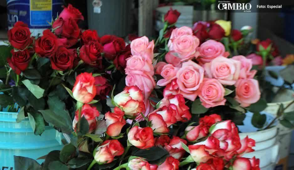 Triplican el precio de la rosa por el #DíaDelAmorYLaAmistad en Atlixco