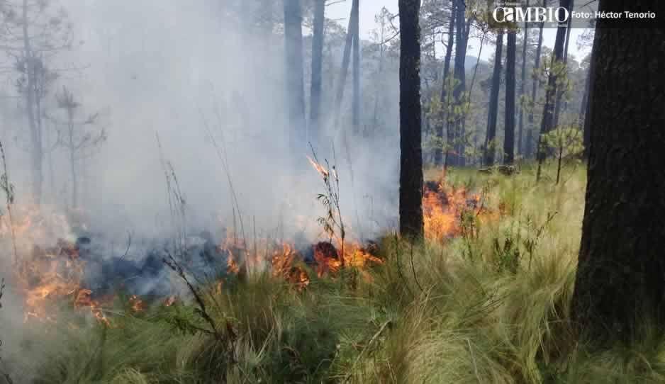 Fuerte incendio forestal consume bosque del Parque Ixta-Popo (FOTOS y VIDEO)