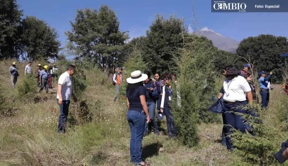 Se reforestan 500 hectáreas en las faldas del volcán