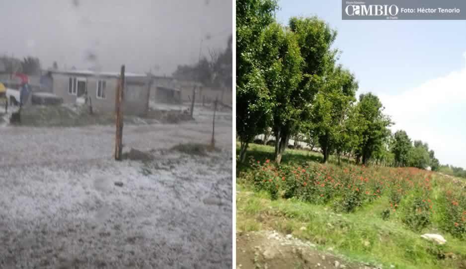 Granizada afecta diferentes cultivos en Tlalancaleca y Chiautzingo