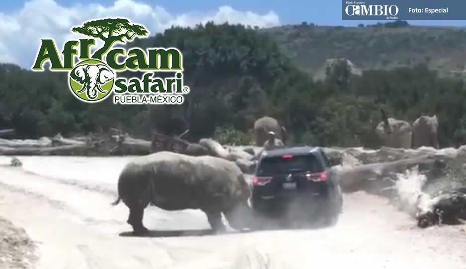 Africam Safari pagó los daños a la familia que embistió rinoceronte