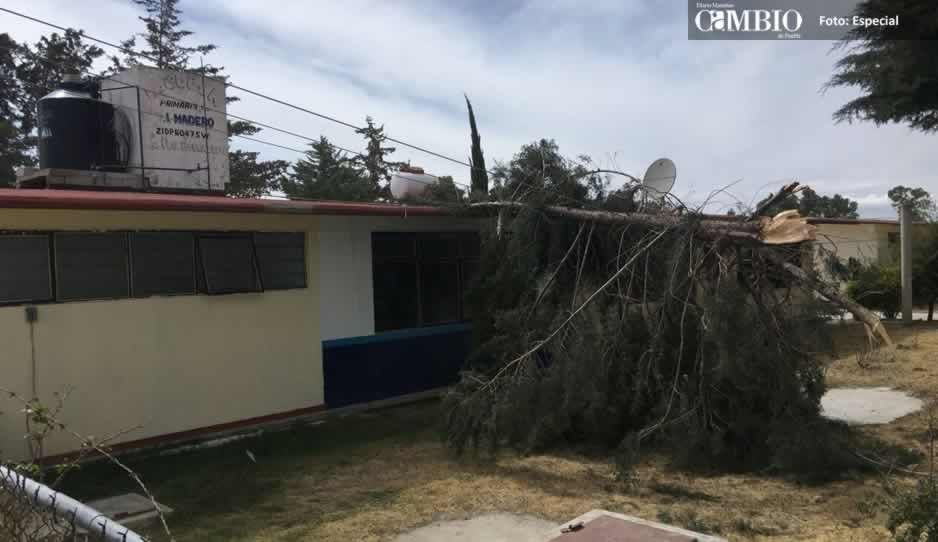Fuertes vientos tiran postes de luz, árboles y espectaculares en Puebla (FOTOS)