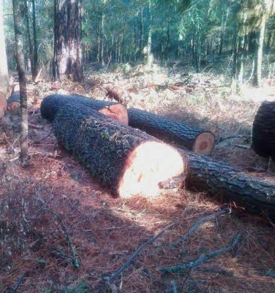 Tala clandestina afecta 17 ejido en Tlahuapan