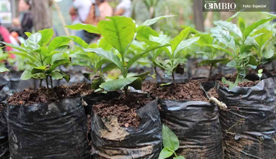 Inicia campaña en Atlixco para reforestar espacios