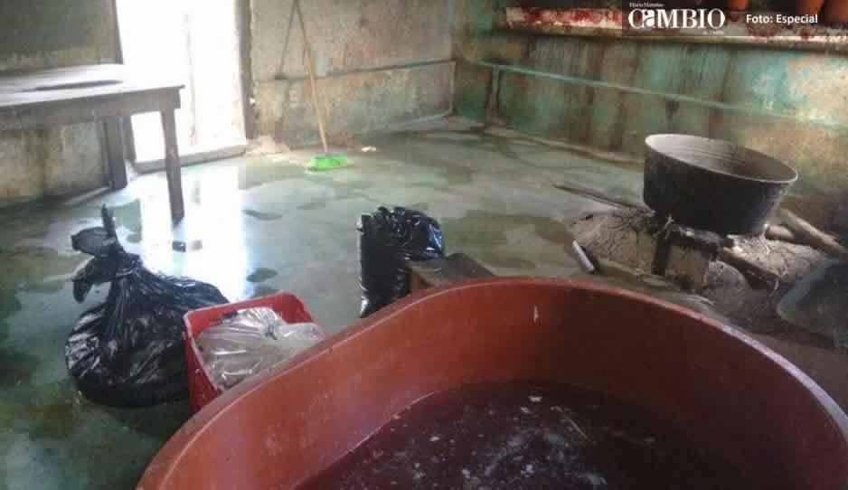 Matadero de pollos clandestino en Atlixco provoca molestia en vecinos