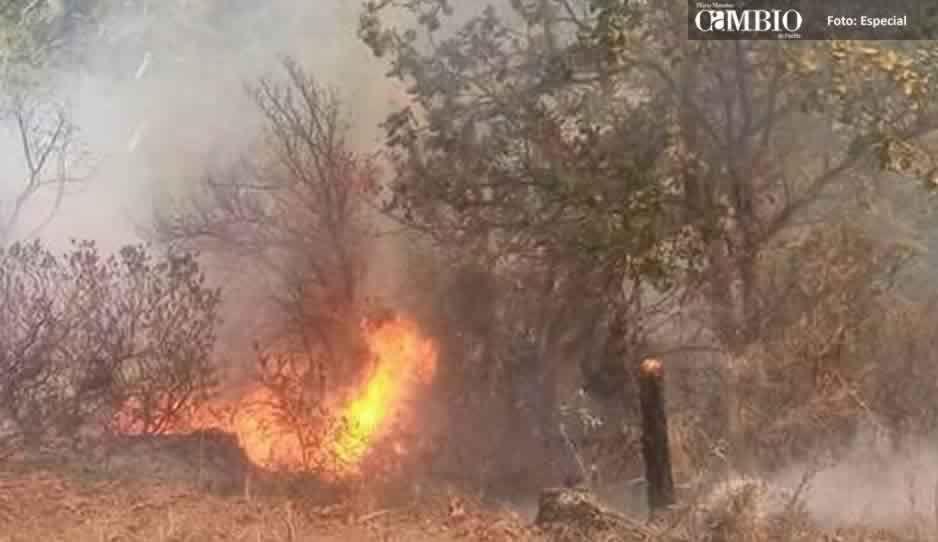 Luego de tres días, logran sofocar incendio en más de 80 hectáreas de bosque en Ajalpan