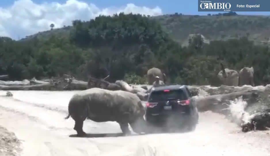 Era de Querétaro la familia que rinoceronte embistió en Africam Safari
