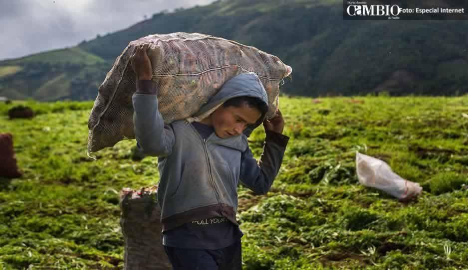 La ASF halla irregularidades por 159 millones en programa de EPN para campesinos