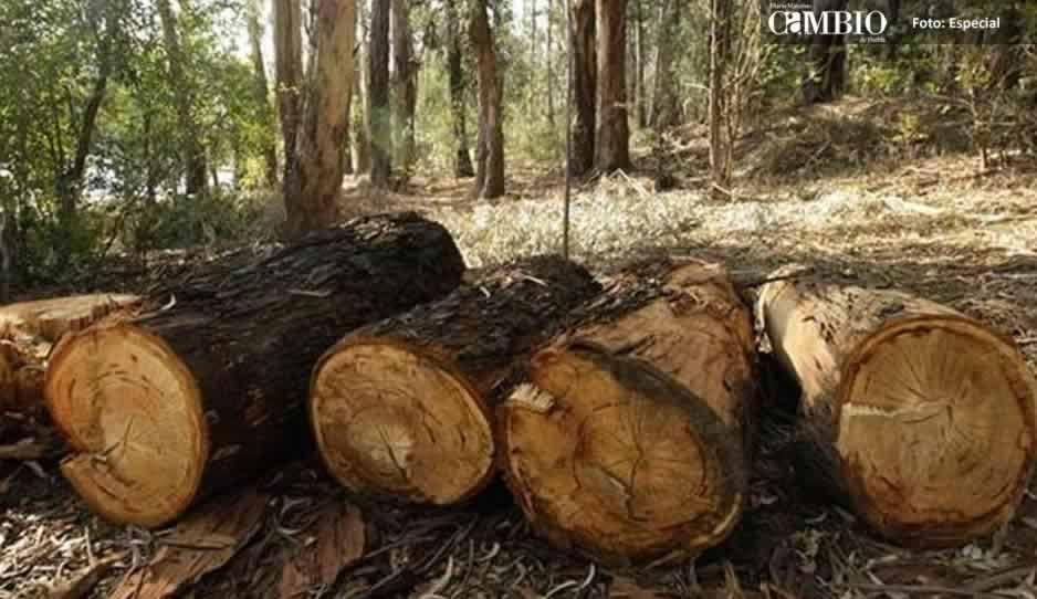 Pobladores de Zoquitlán invaden terrenos en Coyomeapan para tala clandestina