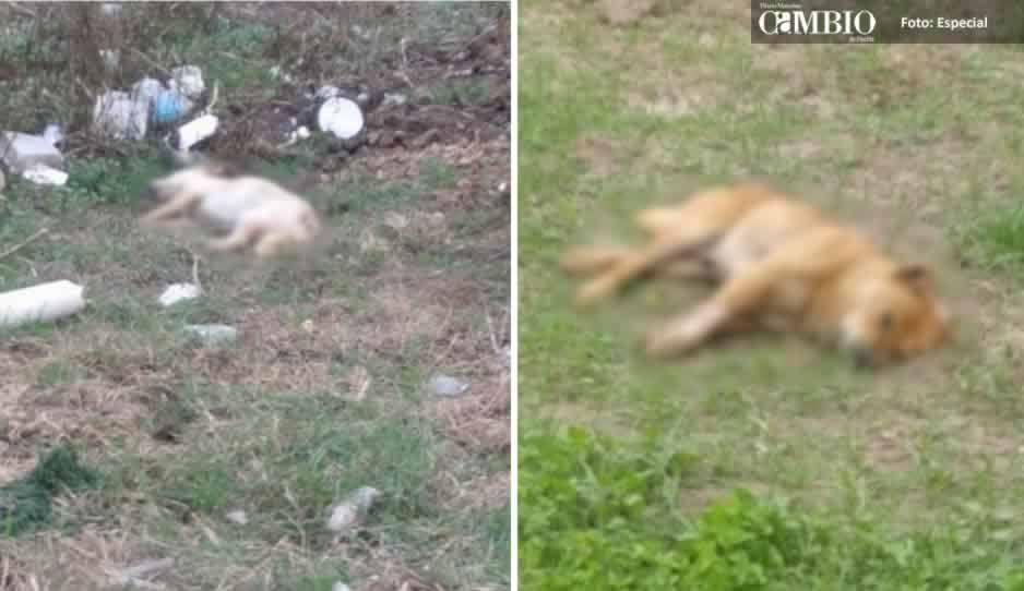 Campesino envenena a más de 20 perros en San Martín
