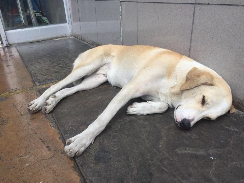 Ramsés, el perrito que se quedó esperando a su dueño afuera del hospital donde murió