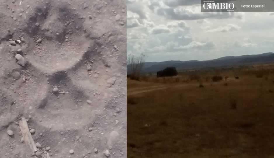 ALV: Presencia de 2 leones causa pánico en Metepec