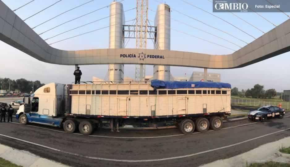 PF asegura tractocamión con un aproximado de seis mil litros de combustible