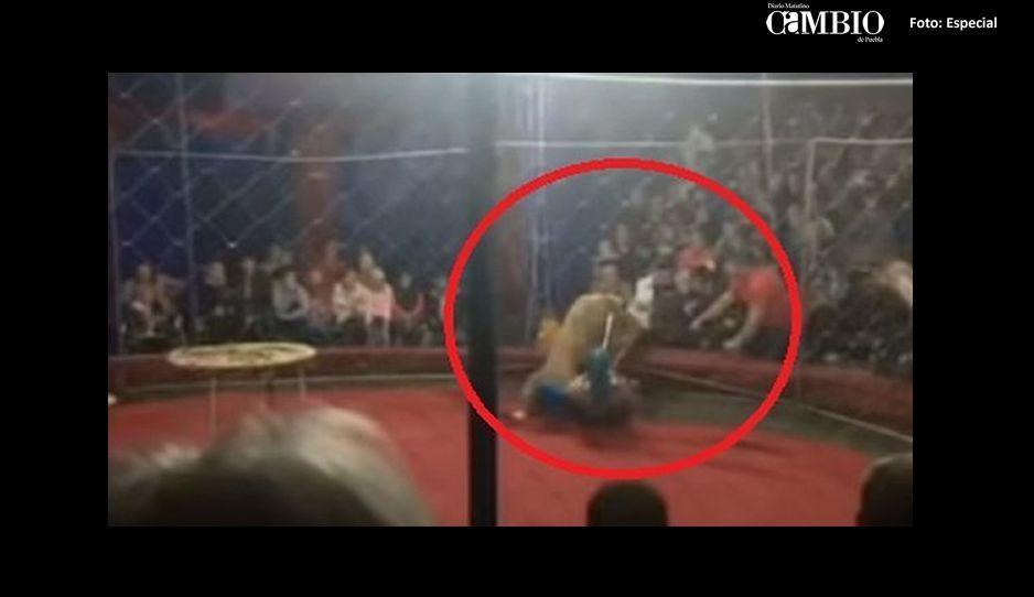 Leona de circo ataca a niña en Rusia