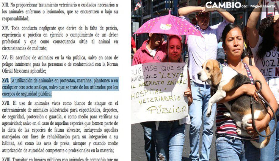 Poblanos infringen la ley en marchas vs la comeperros por llevar a sus mascotas