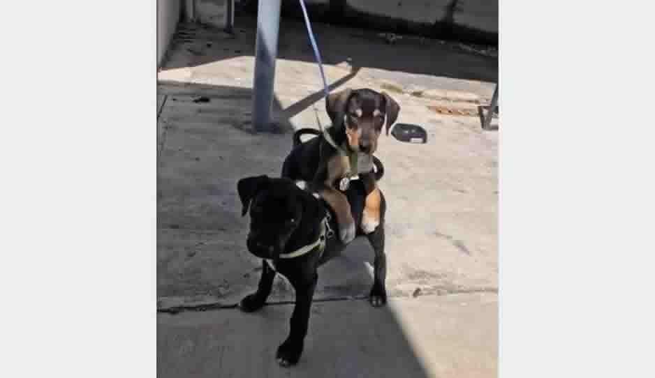 Enternecen redes sociales: Automotriz rescata contrata a dos cachorritos en Chetumal