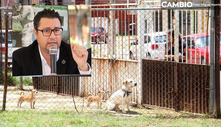 Pierden la batalla: fallecen 3 de las 45 mascotas rescatadas de La Comeperros (VIDEO)