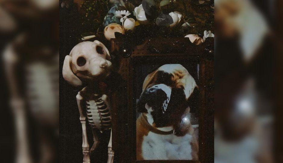 #TeExtrañoLomito el hashtag para recordar a los perritos que se nos adelantaron