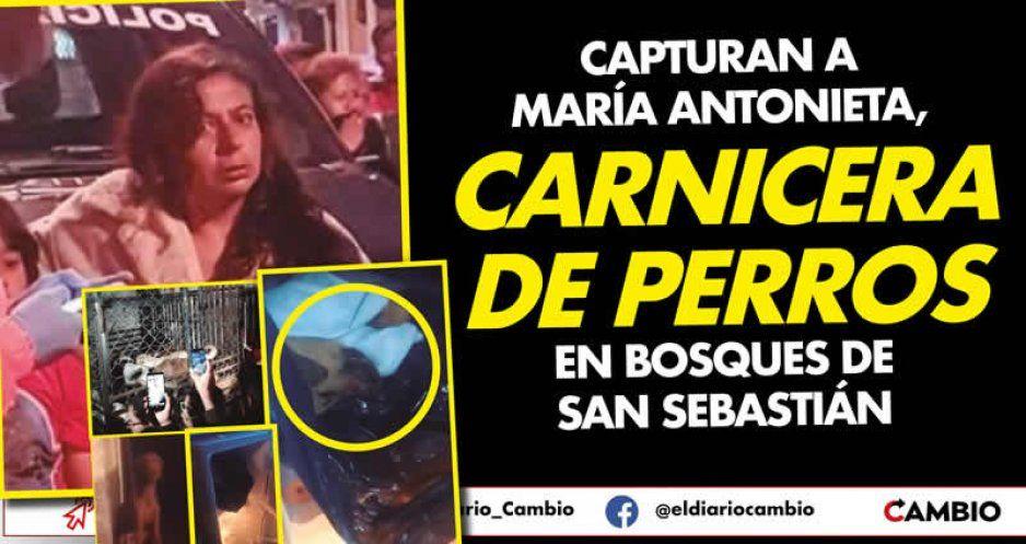 Capturan a María Consuelo, carnicera de perros en Bosques de San Sebastián (VIDEOS)