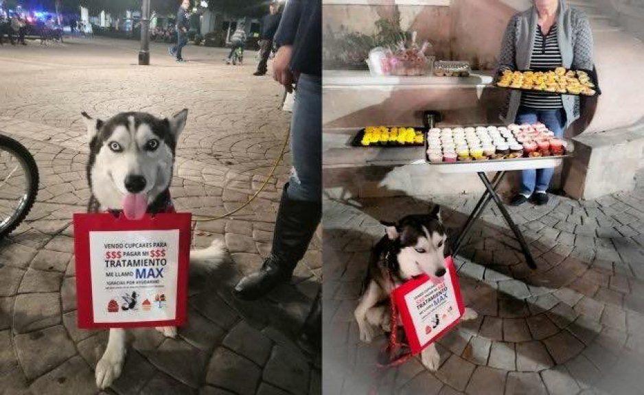 Perrito Max vende pastelitos para pagar su tratamiento contra el cáncer