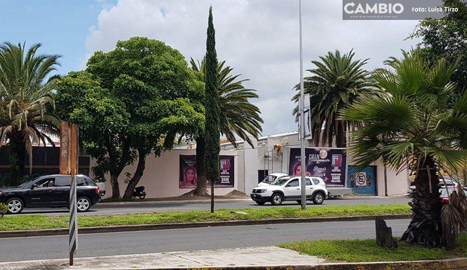 Alcaldesa de Cuautlancingo permite instalación de table dance frente a dos escuelas (VIDEO)