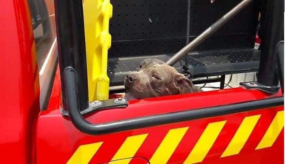 Ahorcan a perro pitbull que mató a niña en Tehuacán