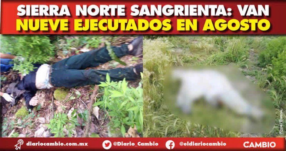Sierra Norte sangrienta: van  nueve ejecutados en agosto