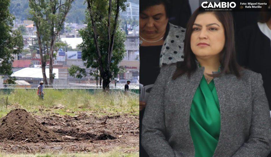 Administración pasada aprobó estudios, por eso Desarrollo Urbano otorgó permisos para tala de árboles en Amalucan: Claudia