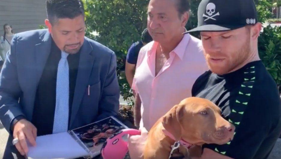 Canelo Álvarez compra perro de 3 millones de pesos (VIDEO)
