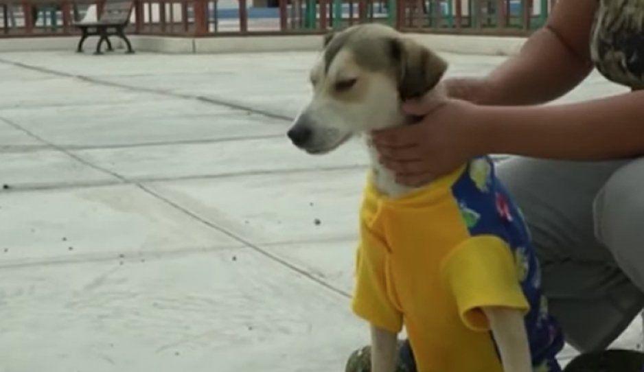 ¡Que hijos de p...! Le roban silla de ruedas a perrito discapacitado (VIDEO)