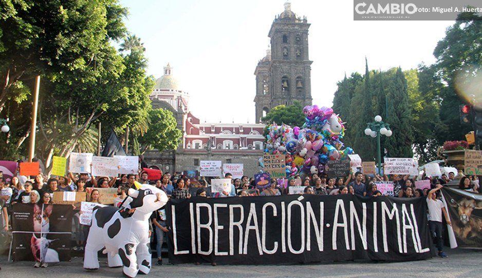 Más de 300 veganos se visten de negro y marchan en protesta del maltrato animal