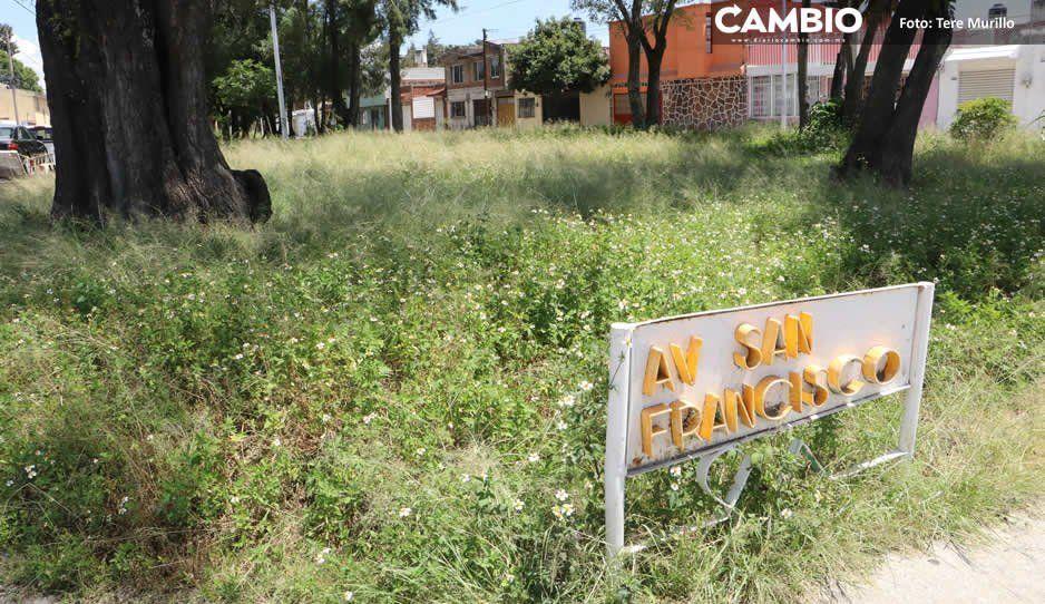 Ayuntamiento lleva seis meses sin cuidar los parques y camellones de San Manuel