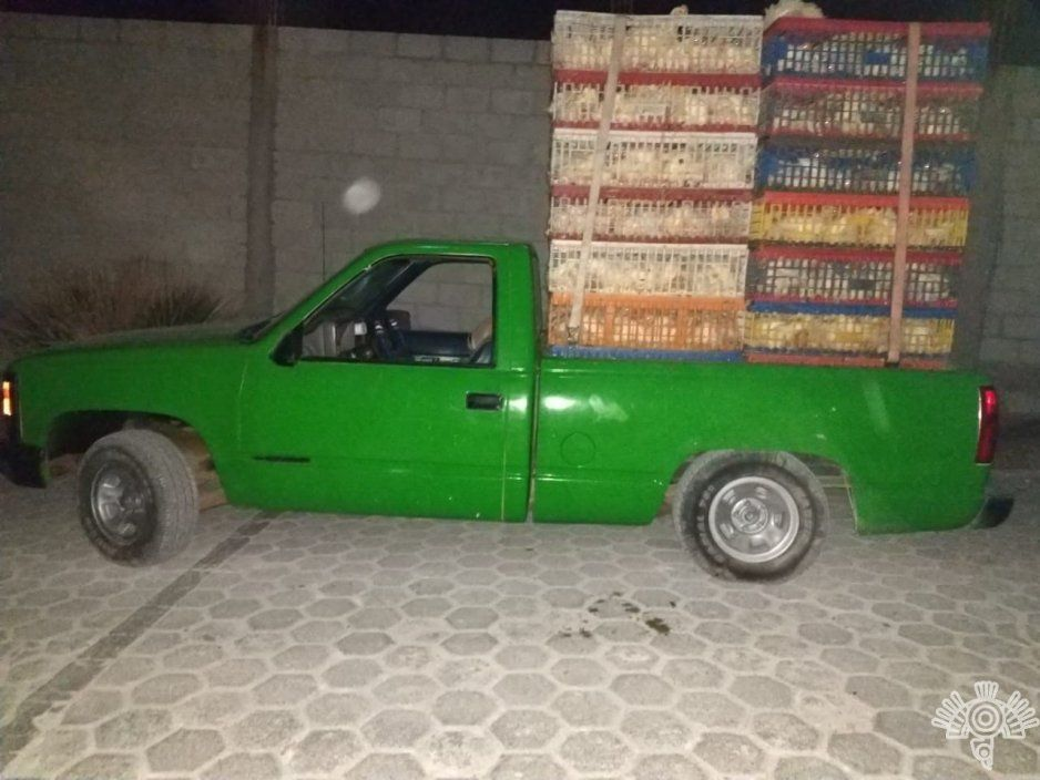 Detienen a robapollos con 600 aves en Zacapala