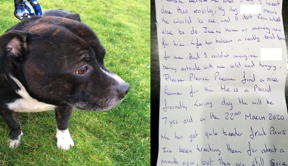 """Hombre abandona su perrito en una iglesia: """"Significa todo para mi, pero no tengo casa ni dinero"""""""