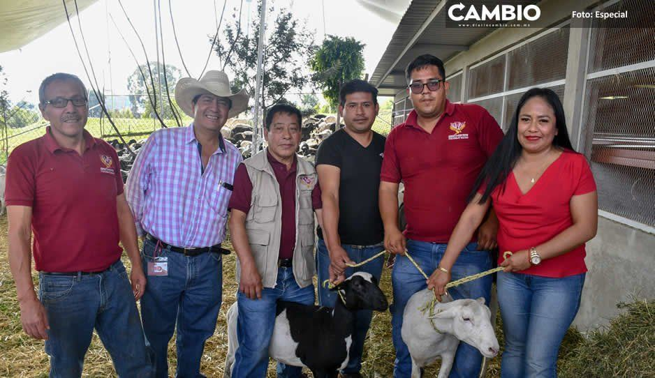 Ayuntamiento de Cuautlancingo entrega 400 cabezas de ganado ovino a familias vulnerables