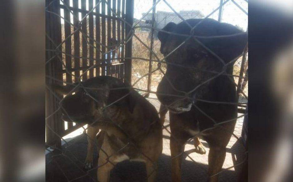 Perritos encarcelados no fueron los culpables del ataque en Santa Lucia: familiares de la víctima