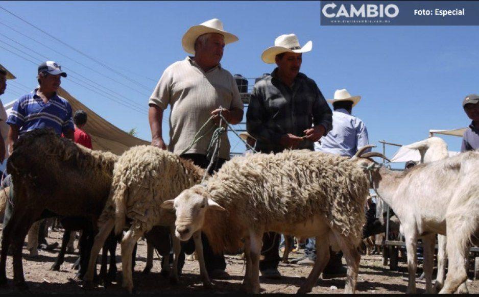 Comerciante de puercos en Tepeaca es baleado en plena vendimia