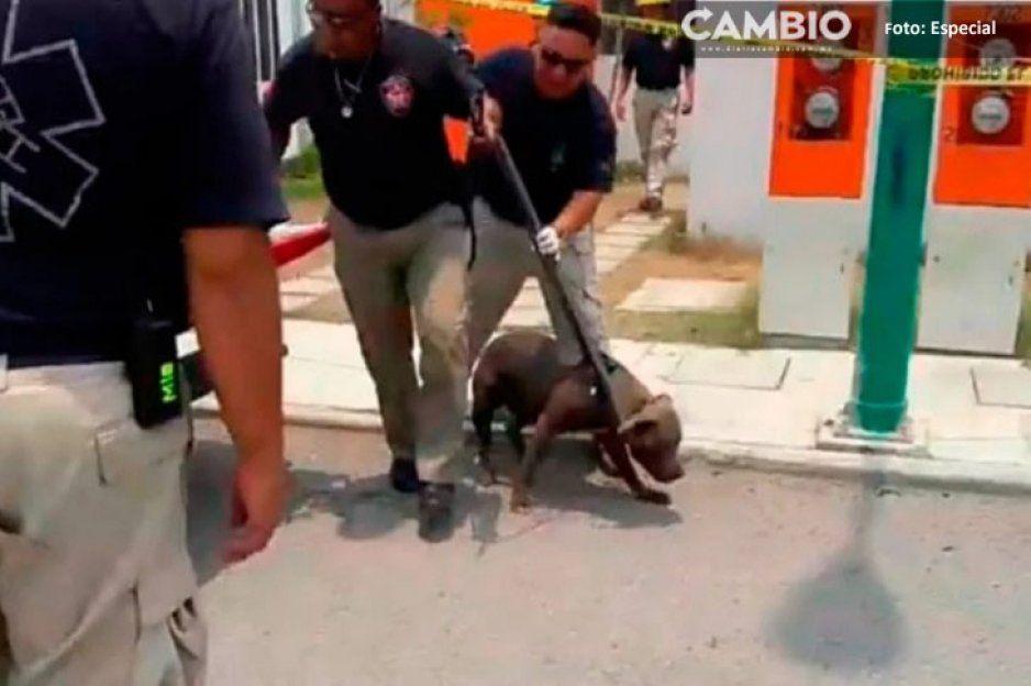 Un calvario el que vivieron padres de la niña asesinada por un perro en Tehuacán (VIDEO)
