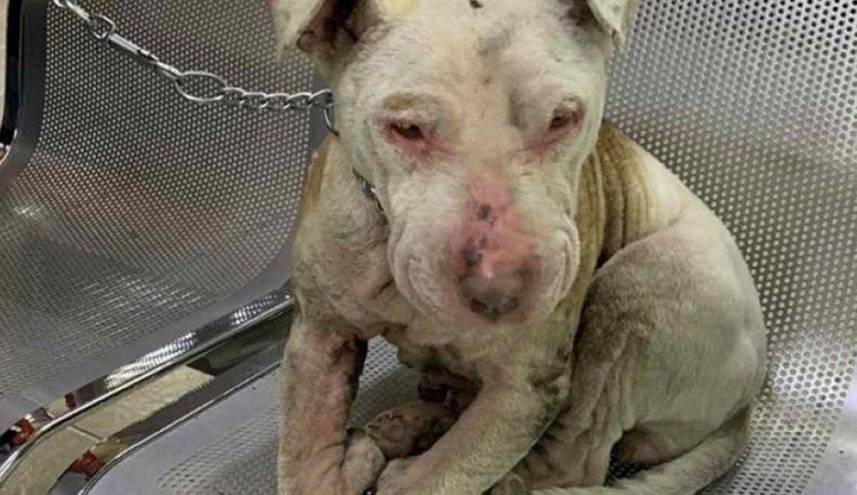 Detienen a sujeto por prenderle fuego a su perro, estrena ley por maltrato animal