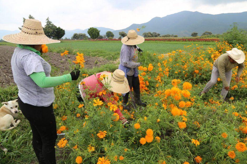 Venta de flor de temporada en Atlixco supera 110 millones de pesos