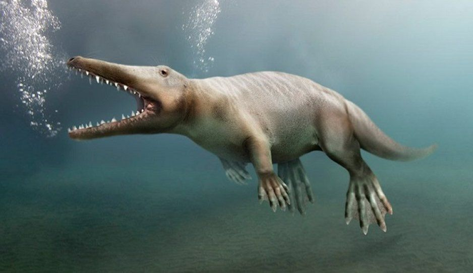 Hallan una especie de ballena de 4 patas