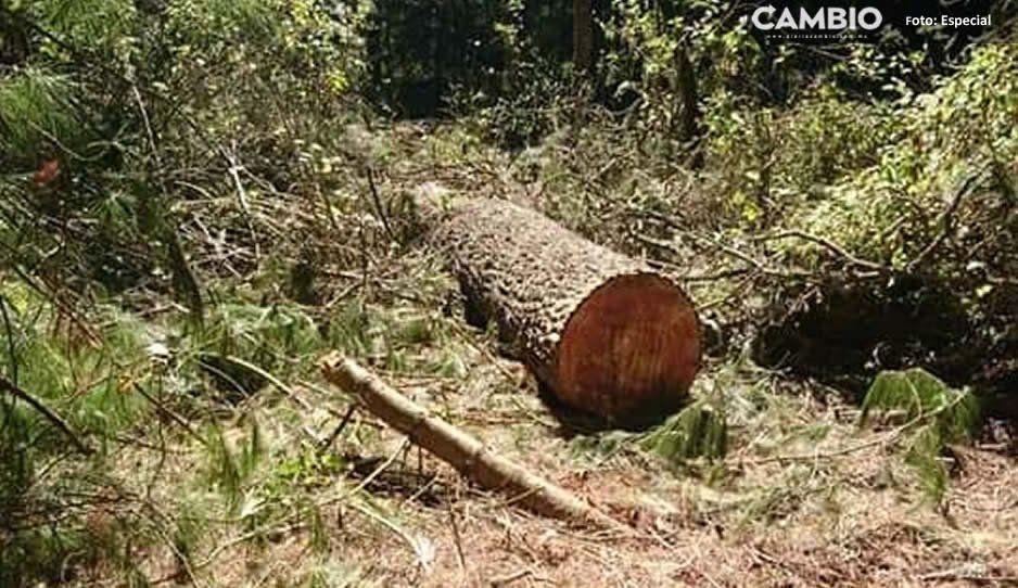Campesinos piden intervención de las autoridades correspondientes ante tala clandestina en Teotlalzingo