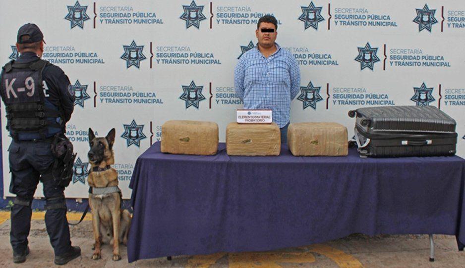 Detienen en la CAPU a hombre con tres empaques con más de 21 kilógramos de marihuana
