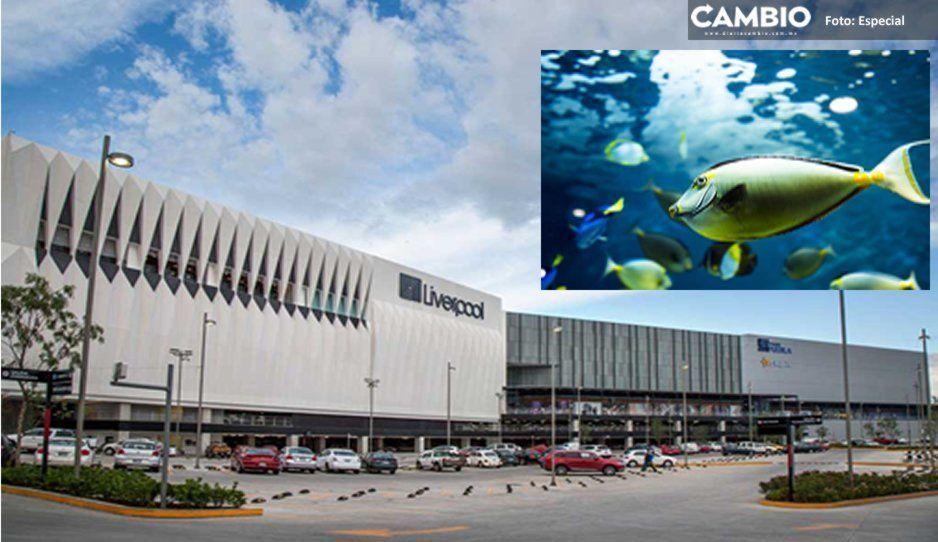 En diciembre, inaugurarán acuario Michin en Parque Puebla
