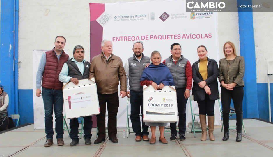 Alcalde Carlos Peredo entrega 10 mil aves  de corral por programa avícola en Teziutlán