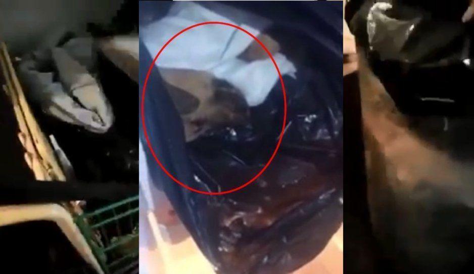 VIDEO: Hasta en bolsas de plástico y botes de basura encontraron perritos en casa de María Consuelo